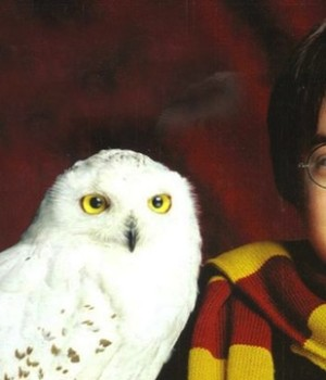 Haryy Potter and owl