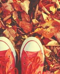 45536237 - shoes red shoes in the autumn leaves