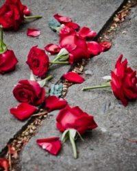 14992216 - broken rose petals on dirt