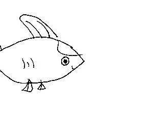 fish jpeg