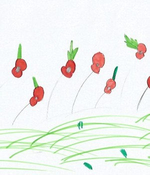 Sarah poppies