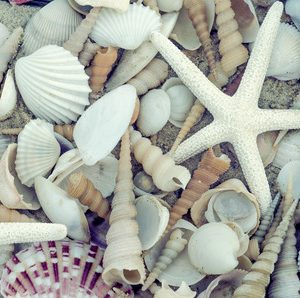 33038905 - bunch of seashells on still life. image can be used as background