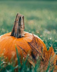 autumn-decoration-fall-511448